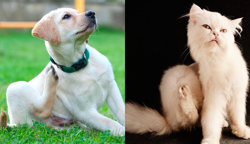 stagione del prurito cane gatto veterinario